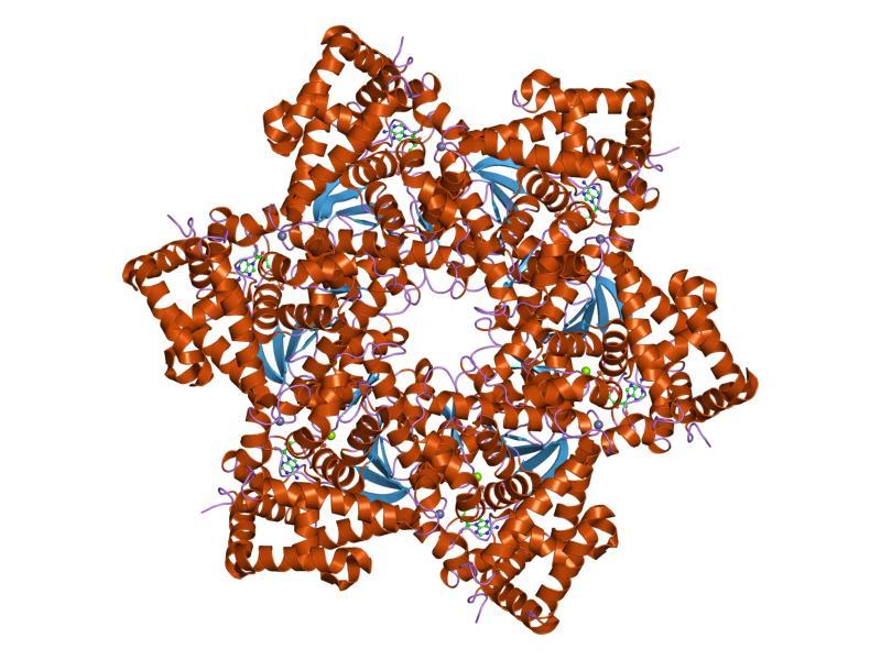 Terápia humán papilloma vírus. HPV-fertőzés tünetei és kezelése